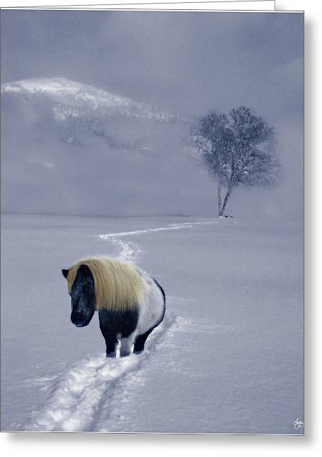 The Mane And The Mountain Greeting Card by Wayne King