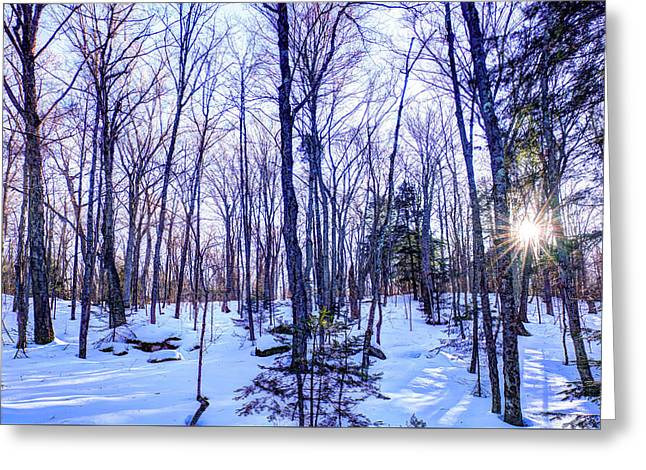 The Many Colors Of Winter 2 Greeting Card