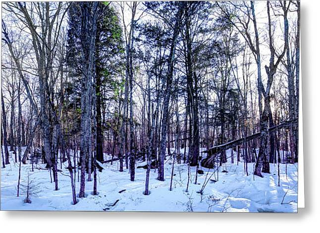 The Many Colors Of Winter Greeting Card