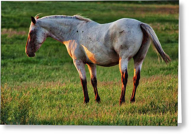 The Mare Greeting Card