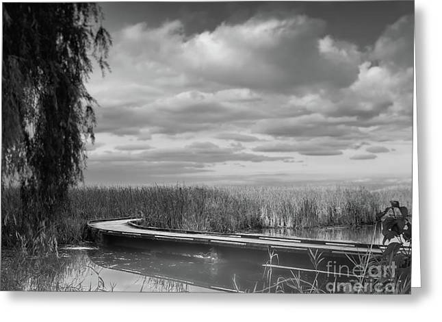 The Marsh-in Black And White Greeting Card by Janal Koenig