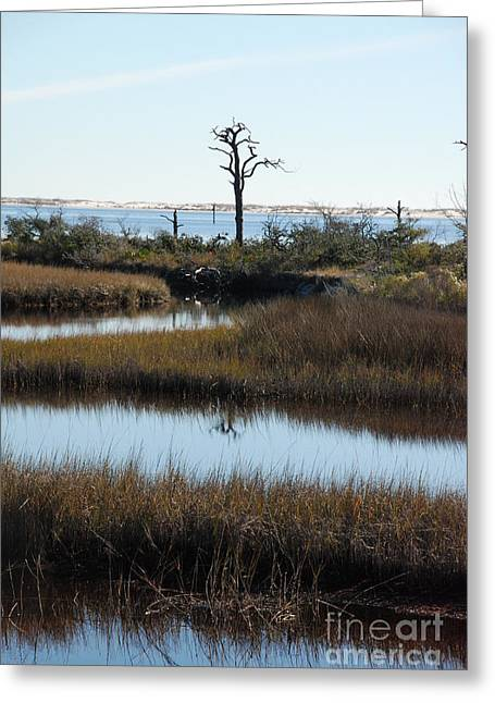 The Marsh Greeting Card