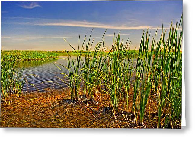 The Marshes Of Brazoria Greeting Card