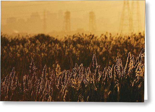 The Marshes Of The Meadowlands Are Lit Greeting Card