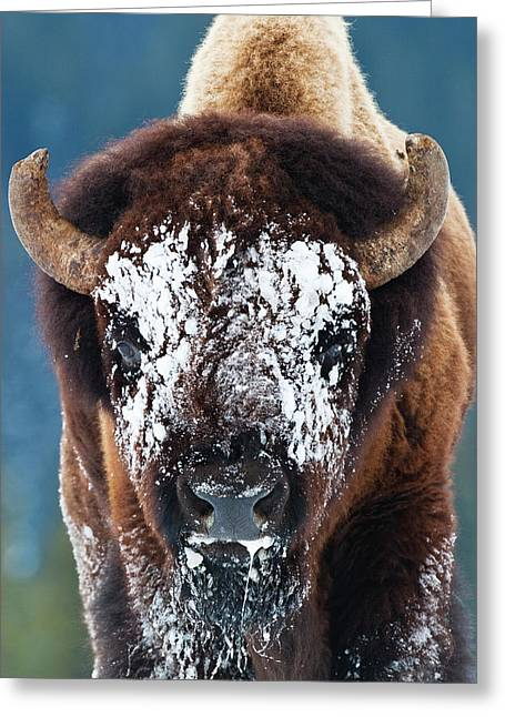 The Masked Bison Greeting Card