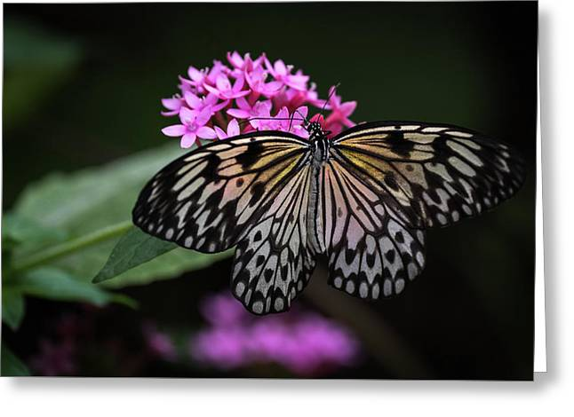 Greeting Card featuring the photograph The Master Calls A Butterfly by Cindy Lark Hartman