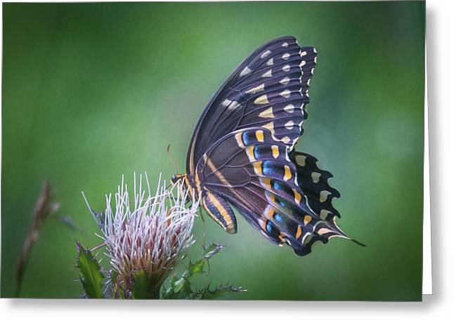 Greeting Card featuring the photograph The Mattamuskeet Butterfly by Cindy Lark Hartman
