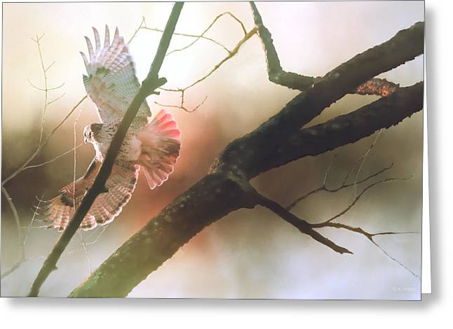 The Messenger Greeting Card by Barbara Hymer