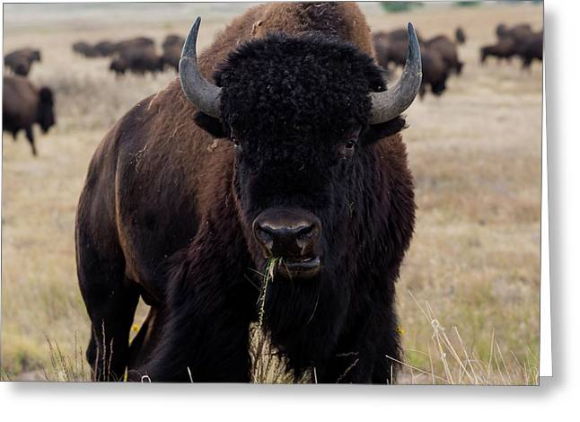 The Mighty Bison Greeting Card