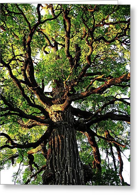 The Mighty Oak Greeting Card by Debbie Oppermann
