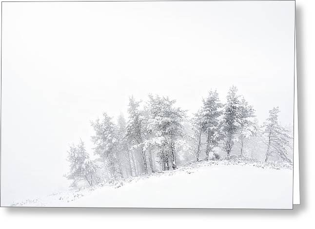 The Minimal Forest Greeting Card