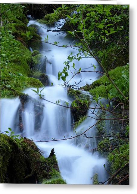 The Misty Brook Greeting Card