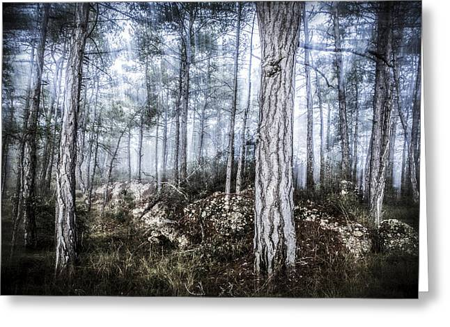 The Misty Forest Greeting Card by Marc Garrido