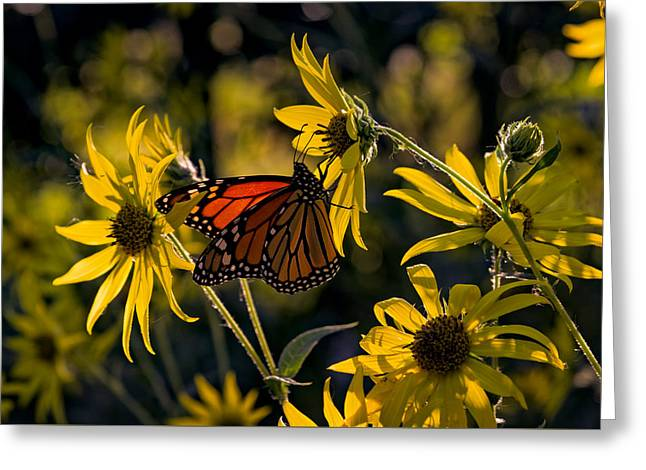 The Monarch And The Sunflower Greeting Card by Rick Berk