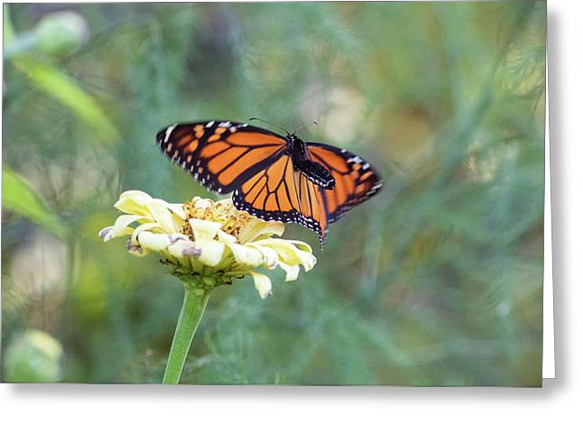 Greeting Card featuring the photograph The Monarch Has Arrived by Brian Hale