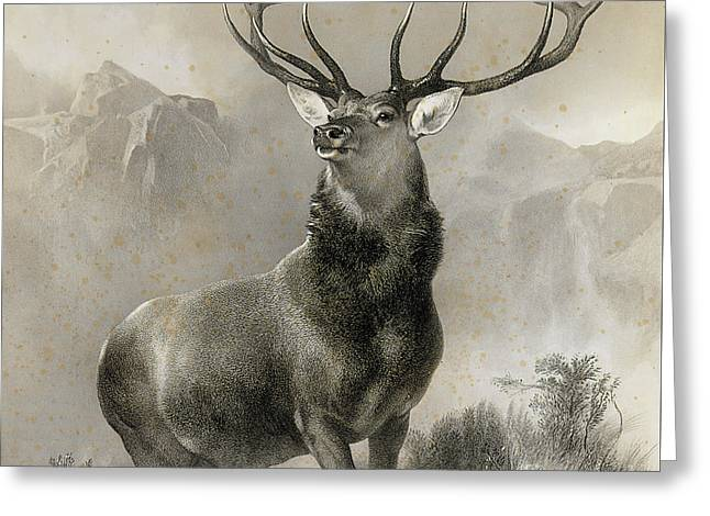 The Monarch Of The Glen, 1852 Greeting Card