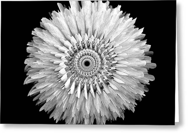 The Monochromatic Mandala Of Rose Greeting Card by Jacqueline Migell