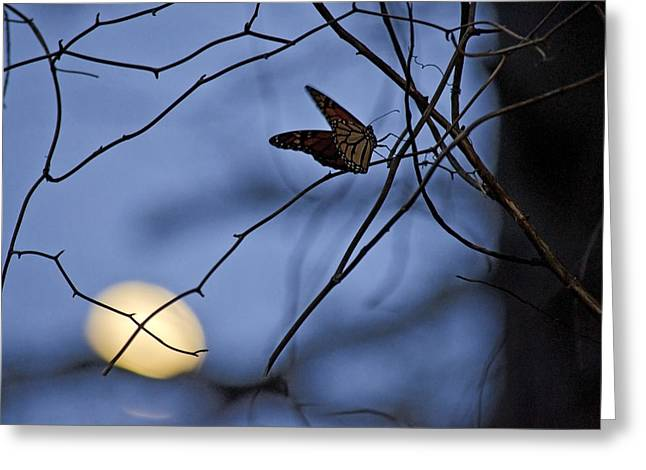 The Moon And The Monarch Greeting Card by Jeff Rose
