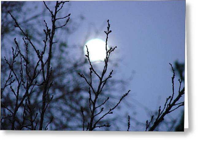 The Moon Greeting Card by Liz Vernand