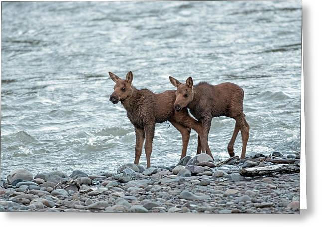 The Moose Brothers Greeting Card by Sandy Sisti