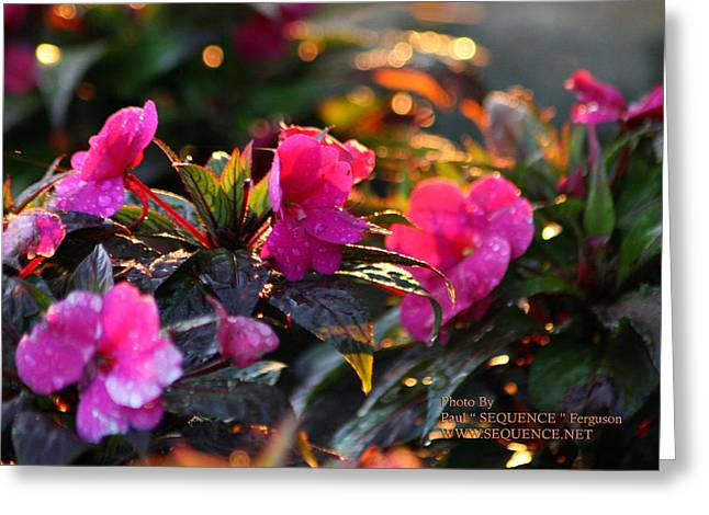 The Morning Flower Greeting Card by Paul SEQUENCE Ferguson             sequence dot net