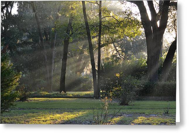The Morning Sunlight Comes Shining Through Greeting Card