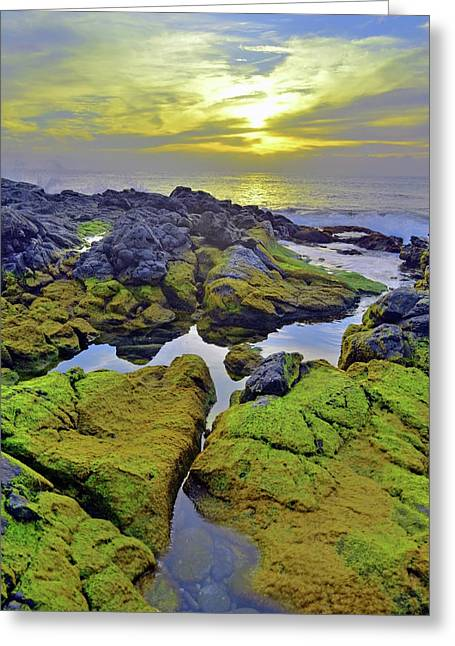 Greeting Card featuring the photograph The Mossy Rocks At Sunset by Tara Turner