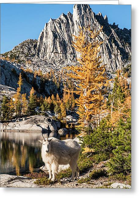 The Mountain Goat In The Enchantments Greeting Card