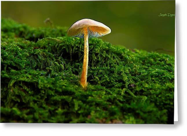 The Mushroom 15 - Pa Greeting Card by Leonardo Digenio