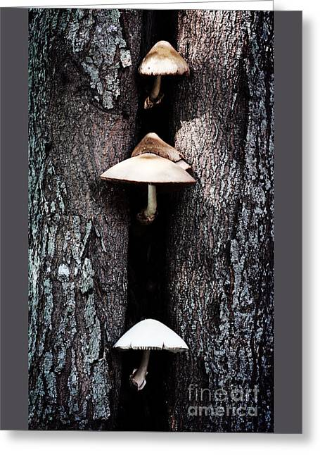the Mushroom Tree Greeting Card by Ella Kaye Dickey