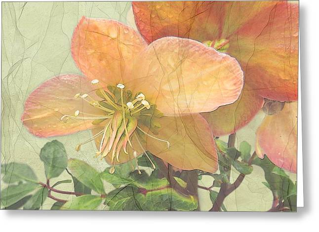 The Mystical Energy Of Nature Greeting Card