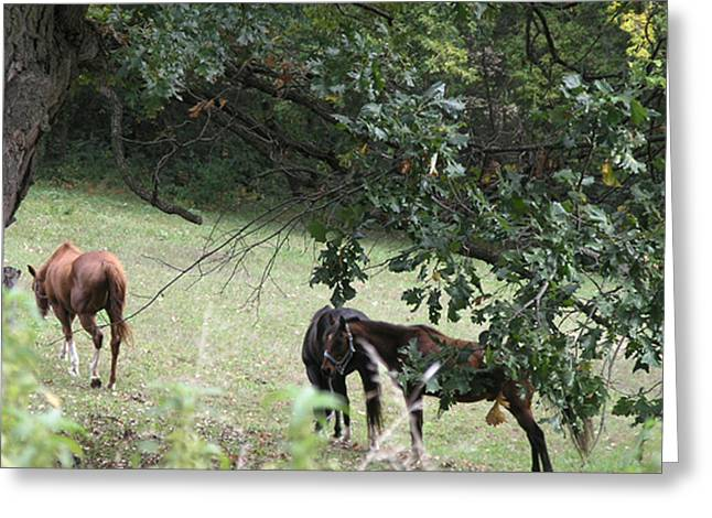 The Neighbors Horses Greeting Card by Janis Beauchamp