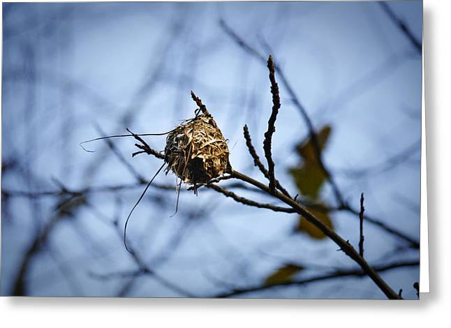The Nest 1 Greeting Card by Teresa Mucha