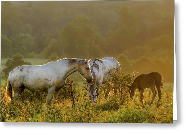 The Next Generation Greeting Card by Ron  McGinnis