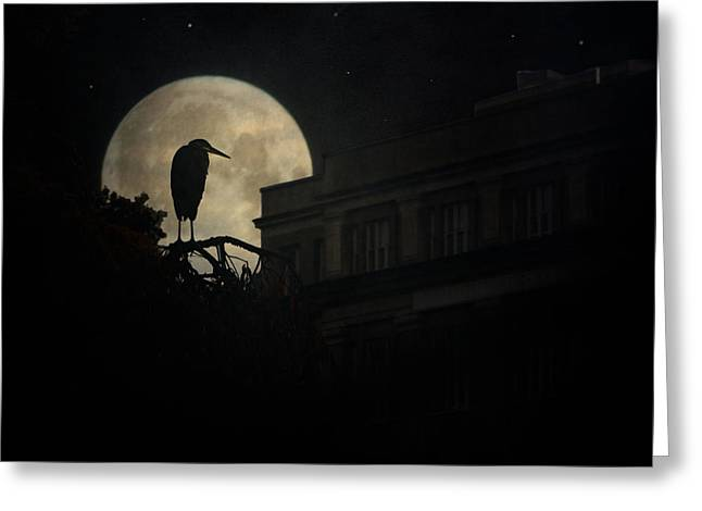 Greeting Card featuring the photograph The Night Of The Heron by Chris Lord