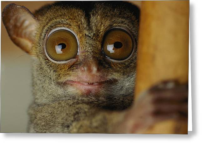 The Nocturnal Tarsier A Rainforest Greeting Card