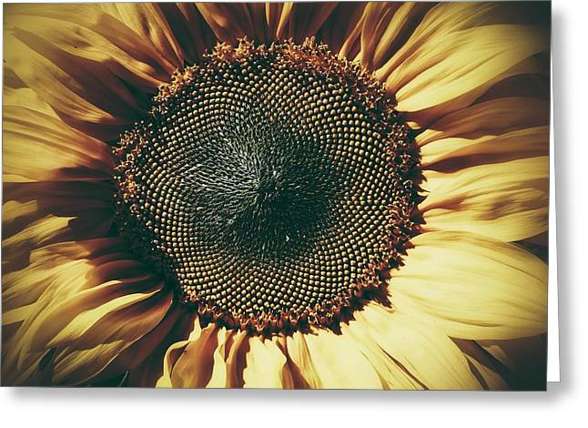 The Not So Sunny Sunflower Greeting Card by Karen Stahlros