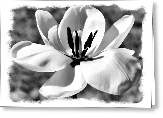 The Notecard Greeting Card by Karen Scovill