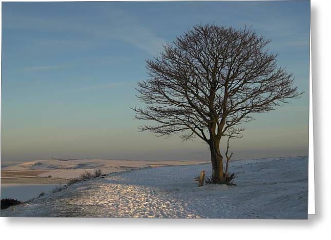 The Nowhere Tree Greeting Card by Hazy Apple