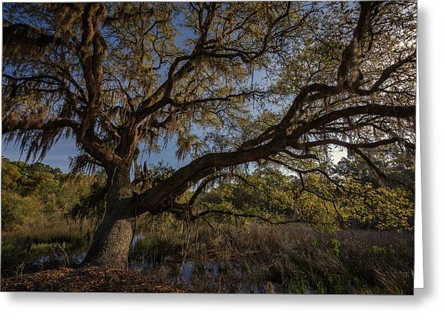 The Oak By The Side Of The Road Greeting Card by Rick Berk