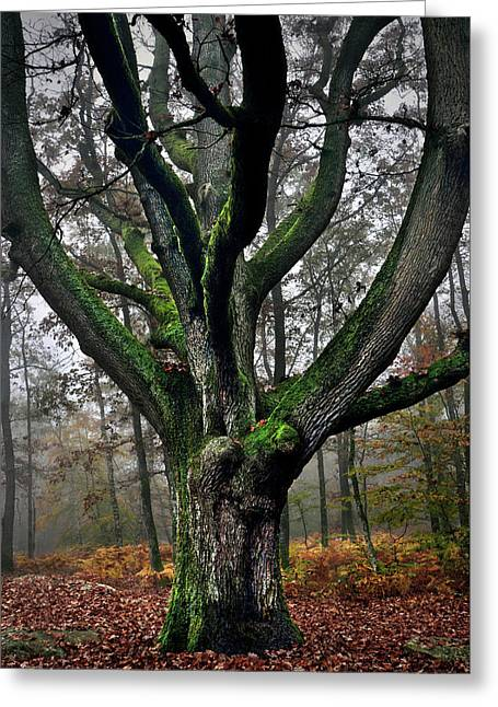 The Oak Of Henri Murger Greeting Card