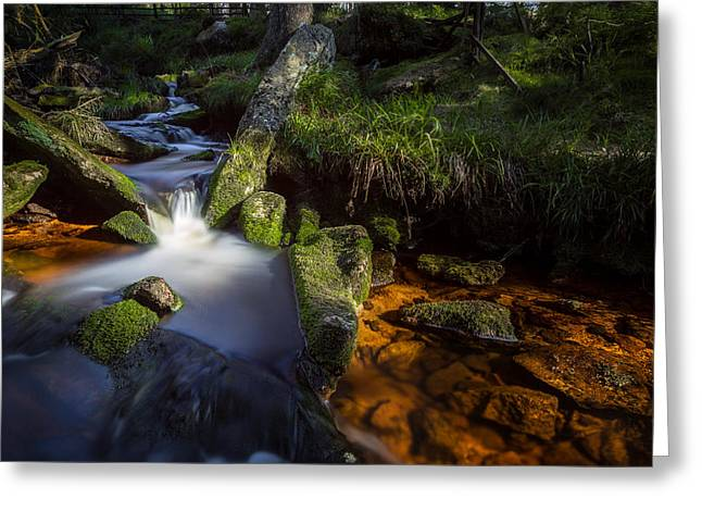 the Oder in the Harz National Park Greeting Card by Andreas Levi