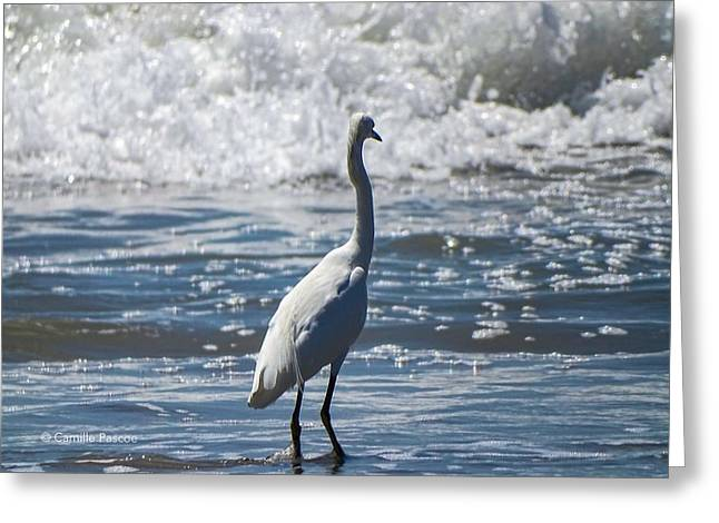 Egret And The Waves Greeting Card