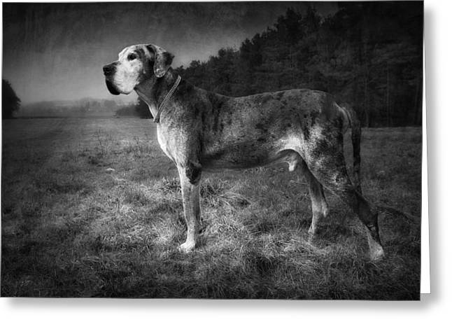 The Old Great Dane Greeting Card