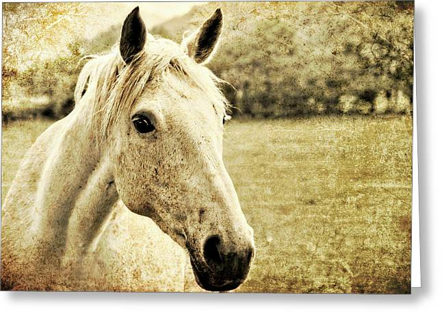 The Old Grey Mare Greeting Card by Meirion Matthias