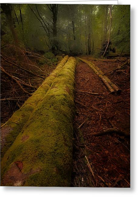 The Old Mossy Trunk Greeting Card