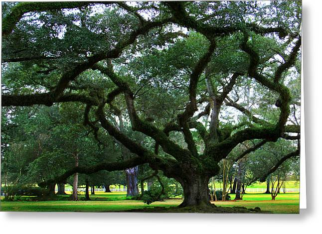 Oak Alley Greeting Cards - The Old Oak Greeting Card by Perry Webster