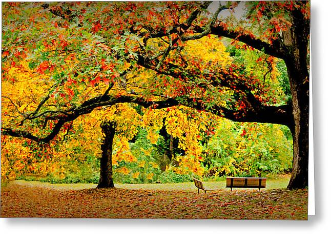 The Old Oak Tree Greeting Card by Diana Angstadt