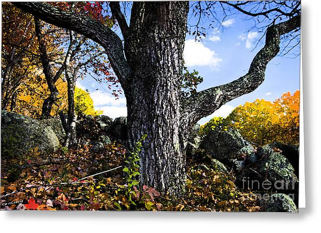 The Old Oak Tree Greeting Card by Jim  Calarese