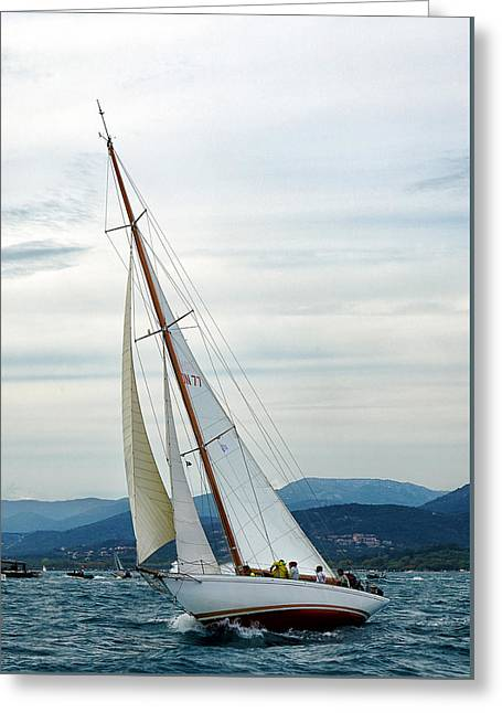 The Old Sailing Yacht At Competitions In The Gulf Of Saint Trope Greeting Card